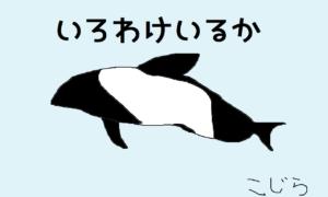 イロワケイルカ(パンダイルカ)