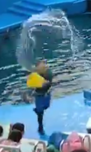 仙台うみの杜水族館水かけ